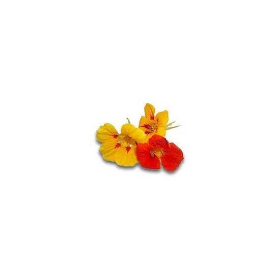 Flor de Capuchinha Orgânica...