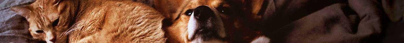 Pet Shop Orgânico direto do produtor à venda no Mercado Orgânico